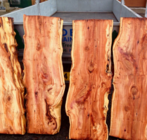 yew wood for making a bow
