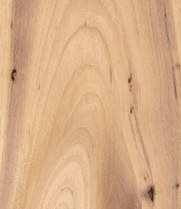 hickory wood for making a bow