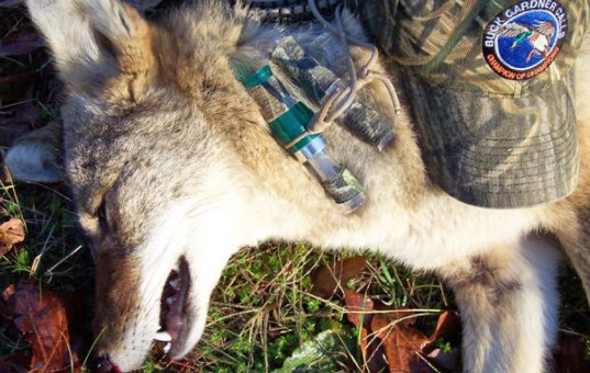 What animals can you hunt in Florida